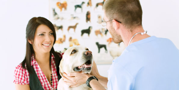 veterinarian and client with labrador retriever
