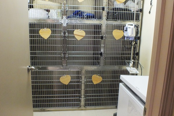 veterinary recovery room with kennel cages